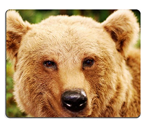 MSD Natural Rubber Mousepad cute face of a brown bear in the middle of the forests after hibernation IMAGE 21433293 (Embalming Table compare prices)