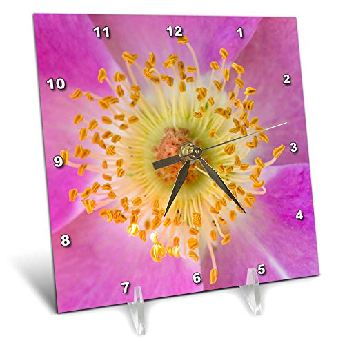 (3dRose Danita Delimont - Flowers - Wild Rose, Rosa acicularis, Palouse Region of Eastern Washington State - 6x6 Desk Clock (dc_315082_1))