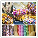 ShopMeeko Semillas: 30 PC/Bolso Dulce del Arco Iris Bonsai maíz también se Seed Colorido maíz en Grano Raro Colorido Vegetal de la Herencia maíz Dulce Grano s
