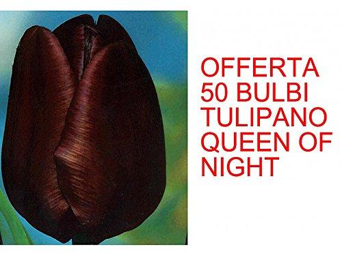 OFFERTA 50 BULBI DI TULIPANO QUEEN OF NIGHT Green Garden
