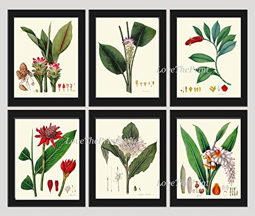 Tropical Flower Print Set of 6 Antique Botanical Beautiful Jewel of Thailand Indian Head Ginger Lily Alpinia Plant Large Blooming Flowers Home Room Decor Wall Art (Indian Lily)