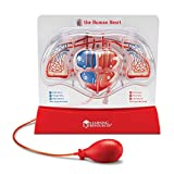 Learning Resources Pumping Heart Model, Teaching