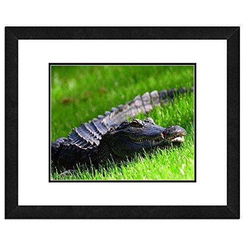 Alligator Photo