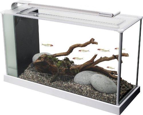 5 Gallon Tank Kit (Fluval Spec V Aquarium Kit, 5-Gallon, White)