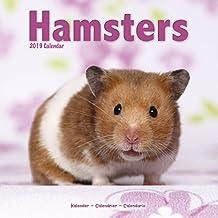 Hamsters Calendar 2019