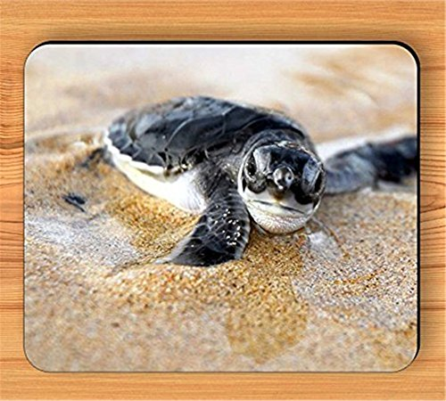 BABY SEA TURTLE READY FOR FREE SEA LIFE MOUSE PAD [Office Product]