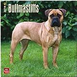 Bullmastiffs Calendar (Multilingual Edition)