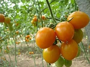 100 pcs Rushed Nueva Promoción plantas al aire libre del jardín semillas de tomate en maceta de Bonsai Balcón de semillas de frutas verduras 2