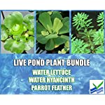 3 Water Lettuce + 3 Water Hyancinth Bundle + Parrot Feather - Floating Live Pond Plants 5