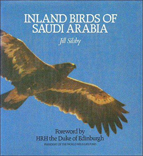 Birds Saudi Arabia - 3
