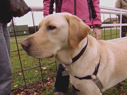 Sam Hearing Dog Rescue