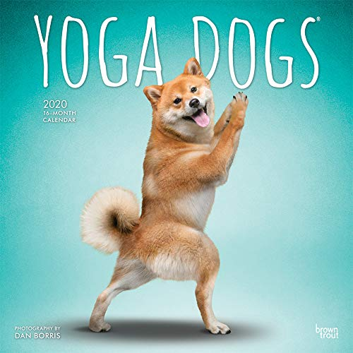 Yoga Dogs 2020 12 x 12 Inch Monthly Square Wall Calendar, Animals Humor Dog
