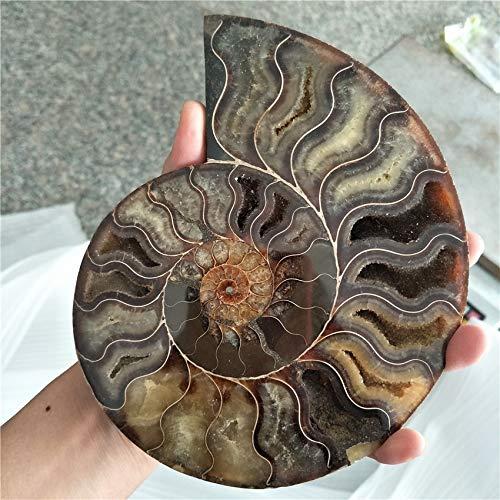 - Dalas Big Size 400-500g Rare Iridescent Ammonite AMMOLITE Shell GEM Fossil Specimen Healing