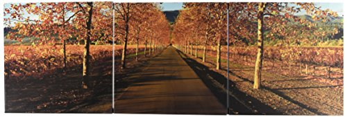 - iCanvasART Vineyards Along a Road, Beaulieu Vineyard, Napa Valley, California, USA by Panoramic Images 3-Piece Canvas Art Print, 36 by 12-Inch