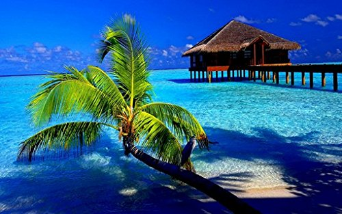 Tropical Paradise Poster Amazing Beach and Palm Tree and Ocean Home Shot Rare Hot