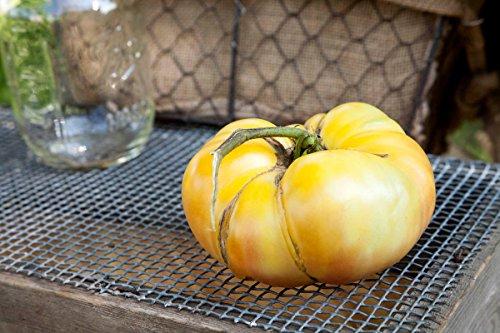 (White Potato Leaf Heirloom Tomato Premium Seed Packet)