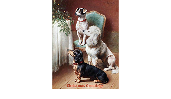 REICHERT LARGE New Blank Note Cards Turtle  C Jack Russell Terrier Puppies ca