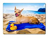 Luxlady Natural Rubber Placemat IMAGE ID: 32316060 chihuahua dog at the ocean shore beach with yellow rubber duck while resting on blue towel