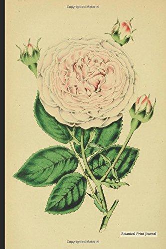 Botanical Print Journal: rosa alba, 6