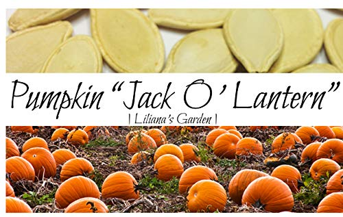 Pumpkin Seeds - Jack O'Lantern - Heirloom - The Original Carving Pumpkin - Liliana's Garden -