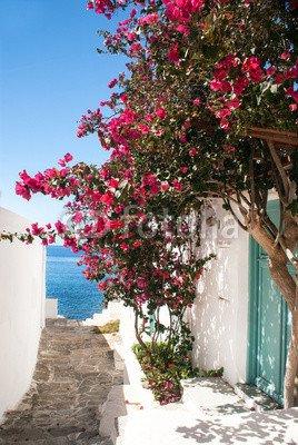 "Alu-Dibond-Bild 70 x 110 cm  ""Traditional greek alley on Sifnos island, Greece"", Bild auf Alu-Dibond"