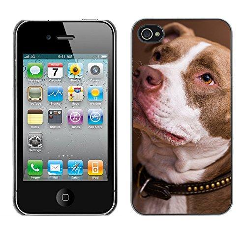 Premio Sottile Slim Cassa Custodia Case Cover Shell // F00023791 chien Loyal // Apple iPhone 4 4S 4G