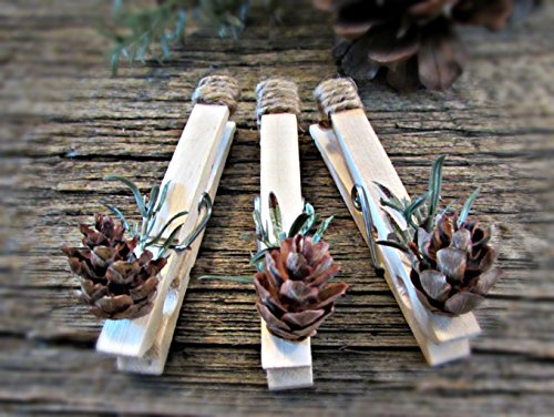 Pinecone Place Card Holders - 4