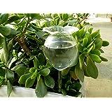 EOEO Self Watering Aqua Globes Hand-blown Mini Glass Automatic Plant Waterer Bulbs Flower Decorative Design,Set of 2pcs