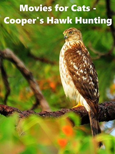 (Movies for Cats - Cooper's Hawk Hunting )