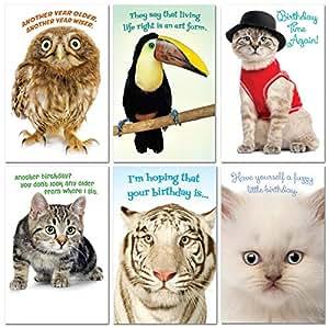 Amazon.com: Prime Greetings 6 divertidas tarjetas de ...