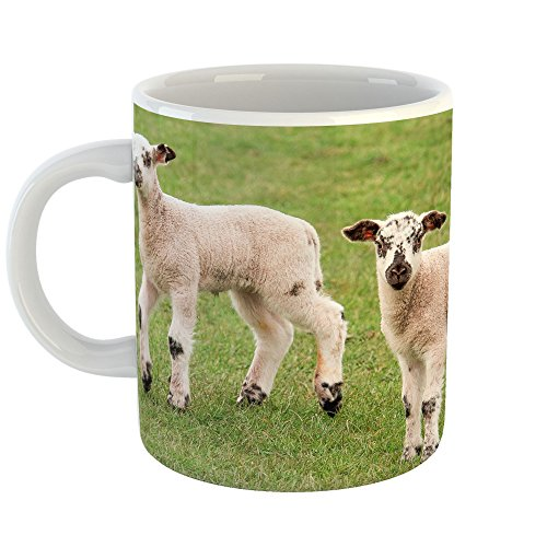 Westlake Art - Coffee Cup Mug - Sheep Pasture - Modern Picture Photography Artwork Home Office Birthday Gift - 11oz (qmr 422)