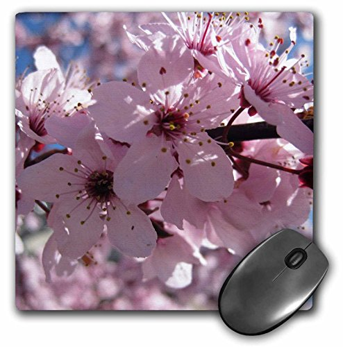 3drose-llc-8-x-8-x-025-inches-mouse-pad-pink-flowering-tree-flowers-macro-photography-floral-mp-2949