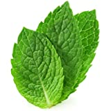 SPEARMINT Flavour Large 20ml Eliquid ★ Exclusive Integrated Dispensing Point ★ VG Premium Base | for ecigarette | electric cigarette | electronic cigarette | clearomiser | clearomizer | eshisha | ehookah | e cigarette (Spear Mint) | Nicotine Free | Tobacco Free