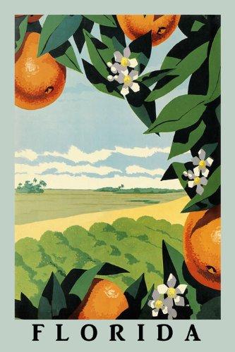 orange-juice-tree-flower-farm-landscape-in-florida-travel-tourism-20-x-30-image-size-vintage-poster-