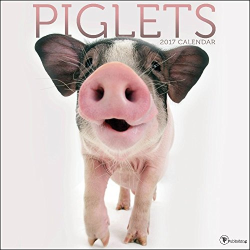 TF Publishing 171003 Wall Calendar 2017, Piglets