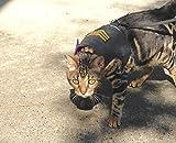 Mynwood Cat Jacket/Harness Sergeant on Black Kitten up to 8month
