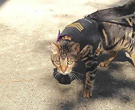 mynwood Cat chaqueta/arnés sargento en negro de gatitos y ...