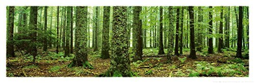- Rain Forest (Green Trees, Panorama) Art Poster Print - 36x12 Art Poster Print, 36x12 Photography Art Poster Print, 36x12