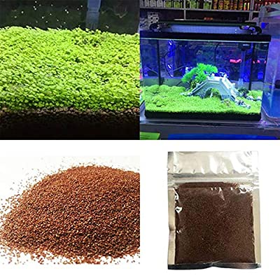 Home Decor Plants Flowers Seeds Fish Tank Aquarium Plant Seeds Aquatic Water Grass Decor Garden Foreground Plant - 1bag : Garden & Outdoor