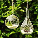 Siyaglass 2 terrari da appendere, in vetro, con fiori e piante, a forma di goccia e sfera