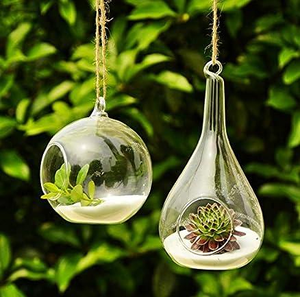 Popolare Siyaglass 2 terrari da appendere, in vetro, con fiori e piante, a  WY85
