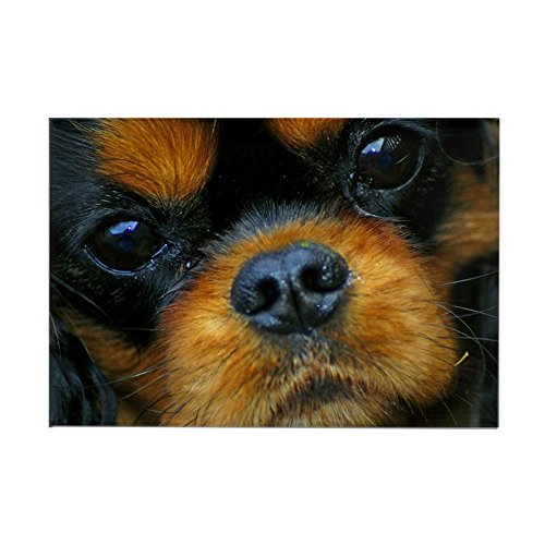 CafePress Coco Rectangle Magnet Rectangle Magnet, 2