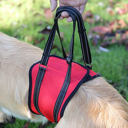 EBRICKON Reflective Pet Dog Lift Harness soft Padded Adjustable Medium Large Dog Support Harness For Old Injured Dogs With (Golden Hind Replica)