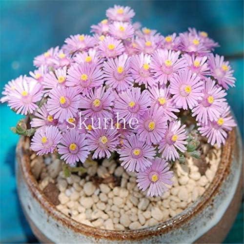 Pinkdose 100 Piezas Mezcla Lithops Bonsai Living Stones Flower ...