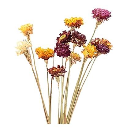 10 Flores Secas Naturales Margaritas Secas Arreglo Floral