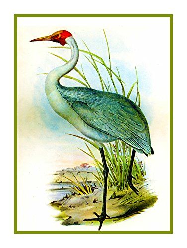 Orenco Originals Australian Crane Heron by Naturalist Gould Birds Counted Cross Pattern