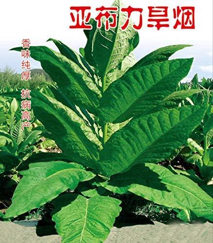 Tobacco 2000 AGROBITS Tobacco 5G 2000 Seeds 5G Organic Virginia Leaf Heirloom Seeds Easy Grow Seeds