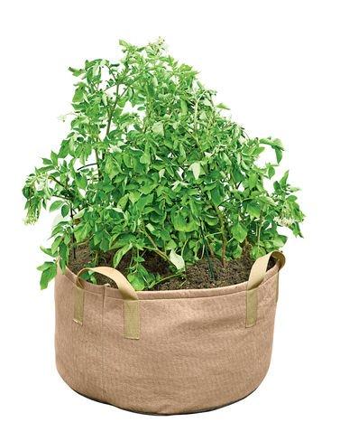 Gardeners Best Jumbo Potato Grow