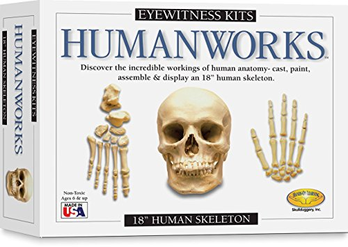Eyewitness Kits PerfectCast Humanworks 18″ Human Skeleton Replica