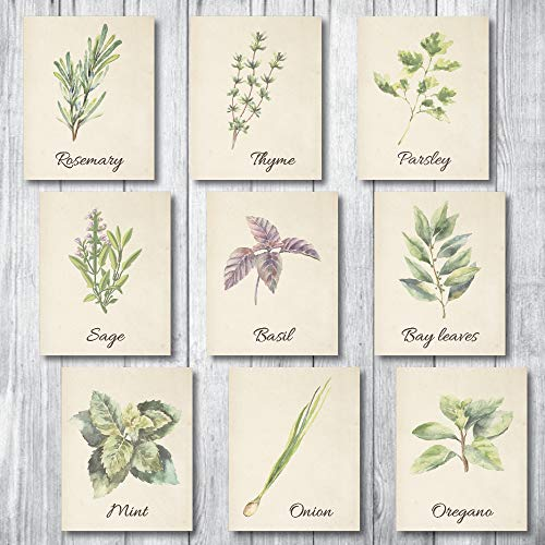 Botanical Prints Wall Decor - Kitchen Art Herbs Leaves Set UNFRAMED Pictures 9 PIECES Nature Floral herb Plant Flower Green Small Botanical Prints Wall Art Vintage Print Poster (Vintage, 5x7)